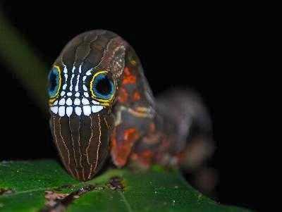 6 Animals That Look Like They're Dressed Up for Halloween