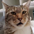 Meet Quilty, The Leader Of Several Cat Shelter Jail Breaks