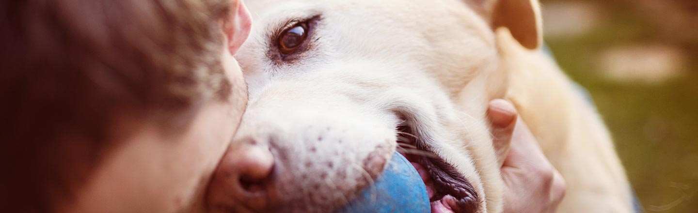 How Our Pets Have Evolved To Emotionally Manipulate Us