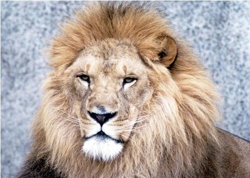 If Egypt's Gladiator Fights a Lion, I Will Fight 11 Turkeys