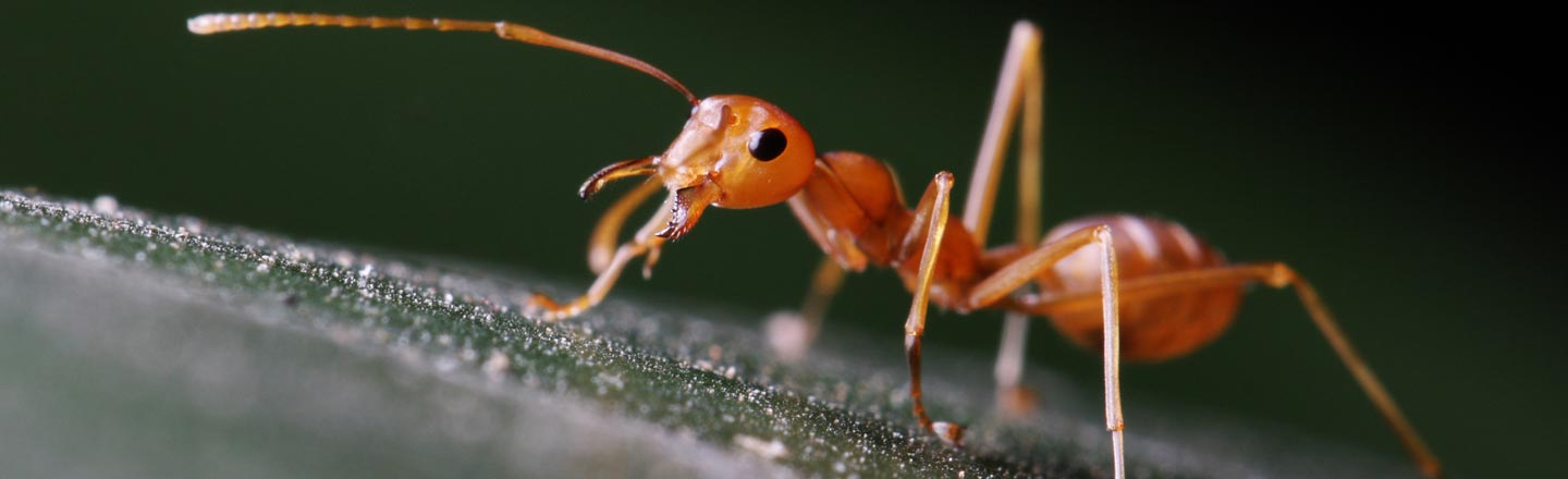 Ants Are Better At Flu Season Than Your Stupid Co-Workers
