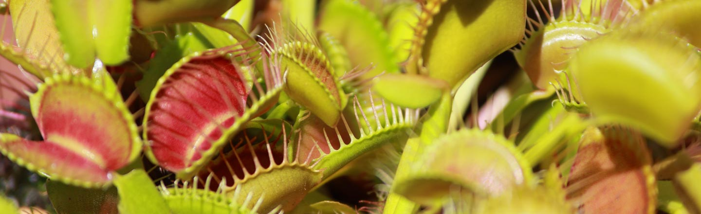 Good News, Everybody: Carnivorous Plants Know How To Count
