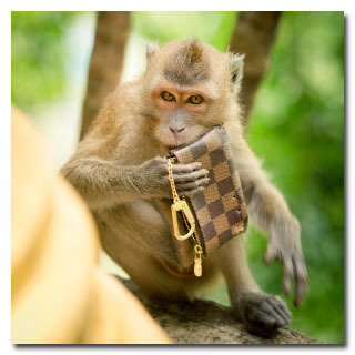 5 Shocking Ways Monkeys Are Just as Dysfunctional as Us