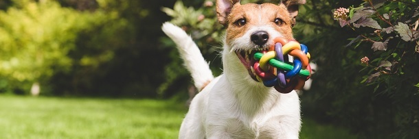 4 Bizarre Things Nobody Tells You About Neutering A Pet