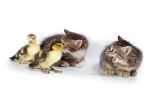 5 Ways to Improve Cats
