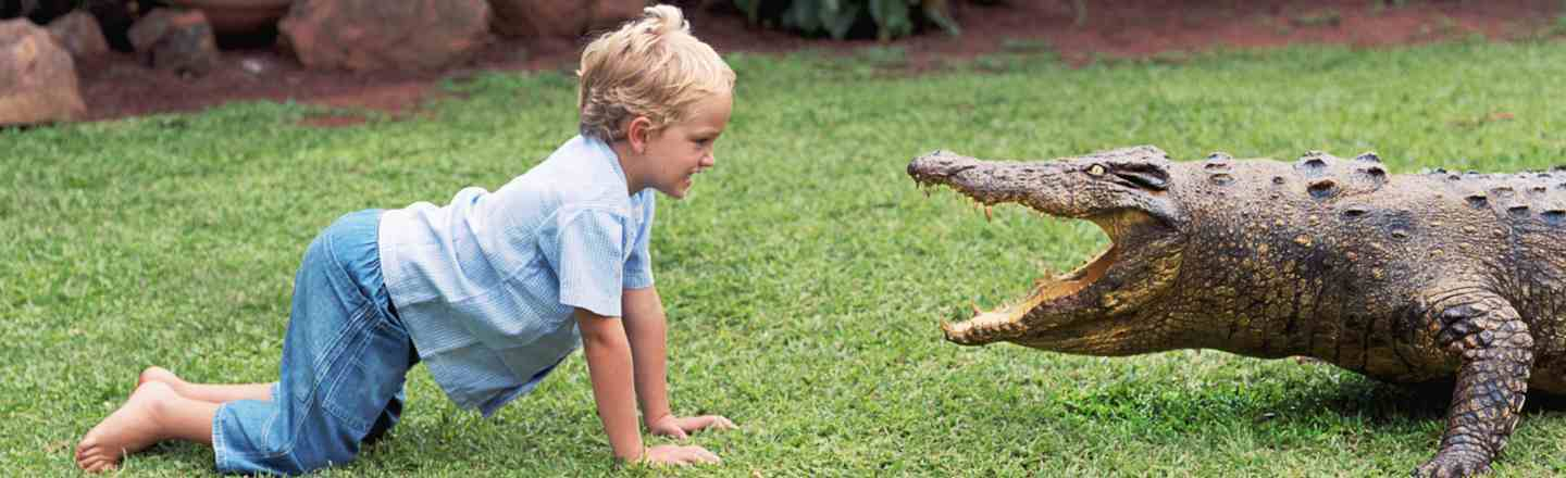 6 Techniques For Attacking Animals With Children