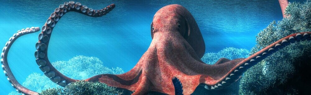 5 Octopus Facts That Prove They're Floating Piles of Superpowers