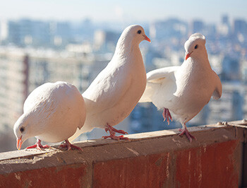 8 Rock Star Tour Requests That Are A Recipe For Madness three white doves looking over a city