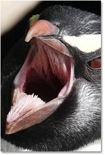The 7 Most Terrifying Mouths In Nature Cracked Com