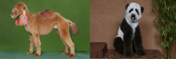 7 Insane Things People Did To Make Their Pets Look Insane