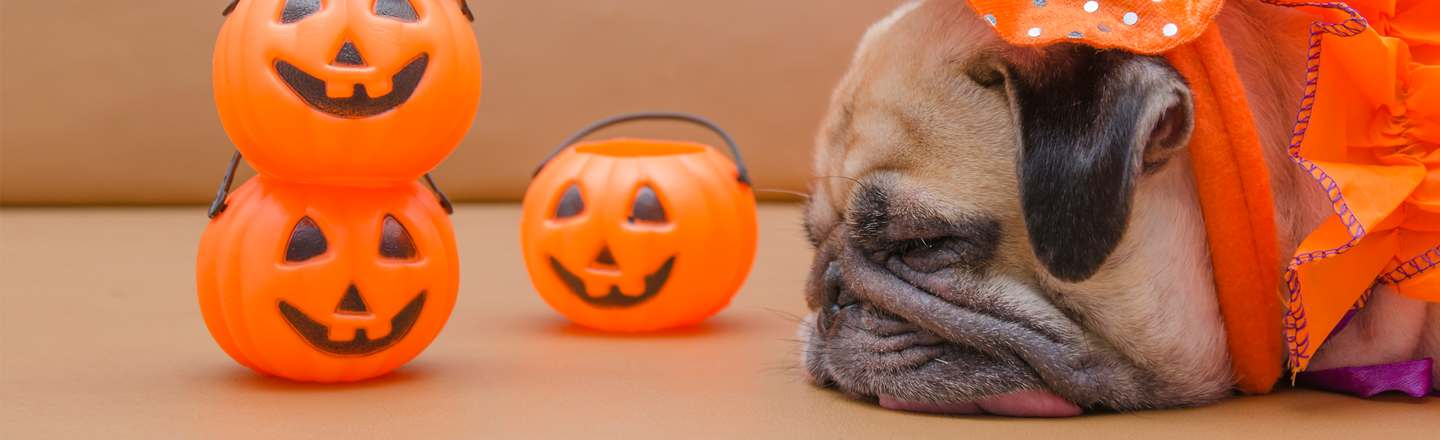 16 Clearly Miserable Dogs In Halloween Costumes