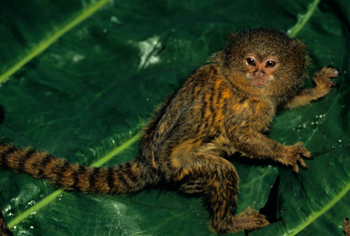5 Eerily Human Things You Won't Believe Animals Do