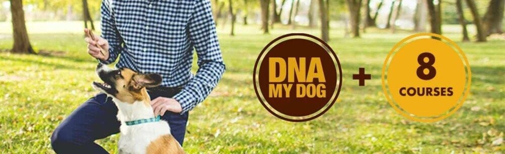 Become A Better Dog Master With This Special Bundle