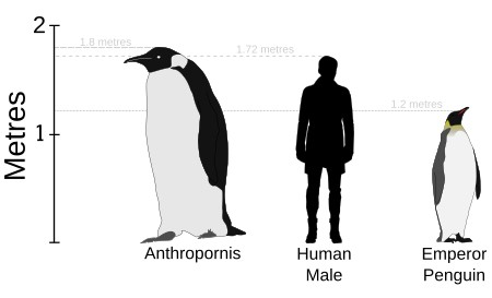 В то время Флорида опасалась, что « гигантский пингвин » терроризирует пляжи