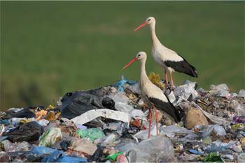 Migrating is for birds, man.<br>  We <i>are</i> birds, Larry.<br>  ... Shut up.