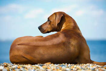 6 Dog Breeds With Secret Superpowers