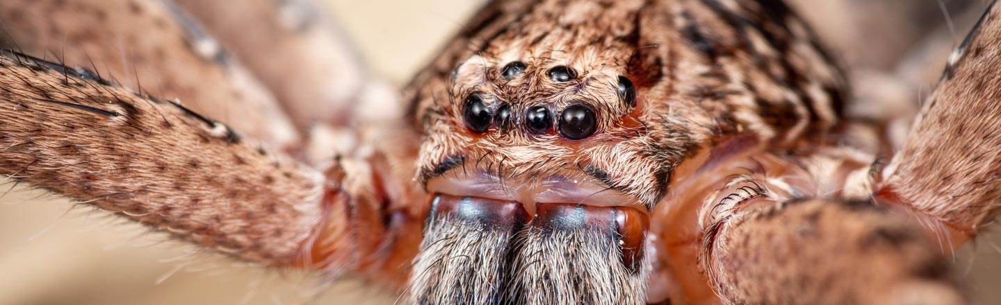 5 Horrific Things You Didn't Know Spiders Can Do To You
