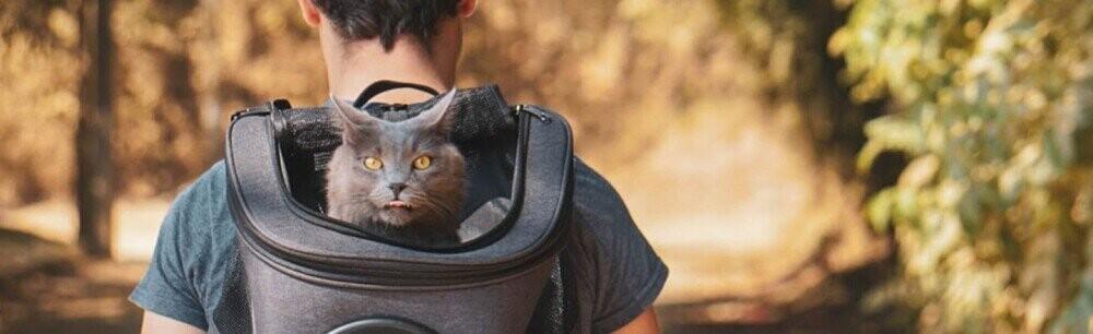 Cat People Need Deals, Too