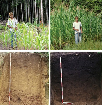 Regular Amazon soil vs. terra preta.