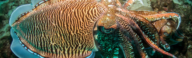 Cuttlefish Pass Test Designed To Measure Children's Willpower