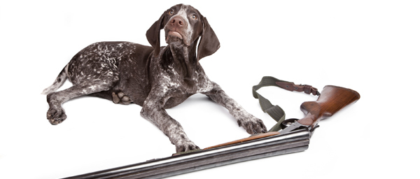 6 Insane Ways Dogs Can Inadvertently Screw Over Their Owners