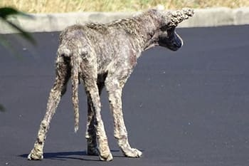 Which is actually a pretty generous instinct for an animal that looks like it would get burned by holy water.