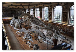 6 Real Museums Straight Out of Your Nightmares