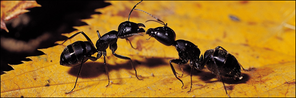 7 Reasons Ants Will Inherit the Earth