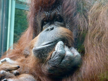 5 Painfully Accurate Human Behaviors In The Primate World