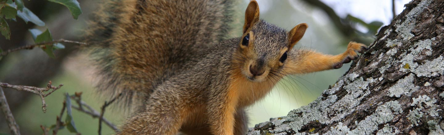 5 Horrors of Nature Happening In Your Backyard (Right Now)