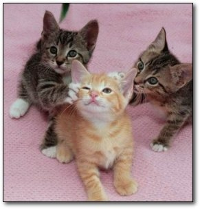 6 Reasons Kittens Suck (Learned While Raising Them
