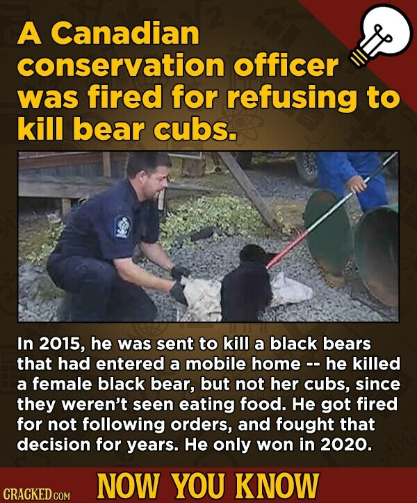 A Canadian conservation officer was fired for refusing to kill bear cubs. In 2015, he was sent to kill a black bears that had entered a mobile home - he killed a female black bear, but not her cubs, since they weren't seen eating food. He got fired for not following