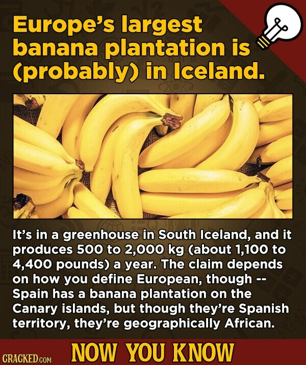 Europe's largest banana plantation is (probably) in lceland. It's in a greenhouse in South Iceland, and it produces 500 to 2,000 kg (about 1,100 to ,400 pounds) a year. The claim depends on how you define European, though -- Spain has a banana plantation on the Canary islands, but though they're