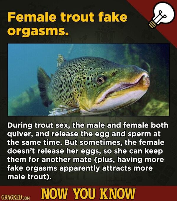 Female trout fake orgasms. During trout sex, the male and female both quiver, and release the egg and sperm at the same time. But sometimes, the female doesn't release her eggs, So she can keep them for another mate (plus, having more fake orgasms apparently attracts more male trout). NOW