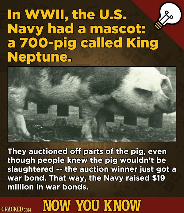 In WWIl, the U.S. Navy had a mascot: a 700-pig called King Neptune. They auctioned off parts of the pig, even though people knew the pig wouldn't be slaughtered - the auction winner just got a war bond. That way, the Navy raised $19 million in war bonds. NOW YOU KNOW