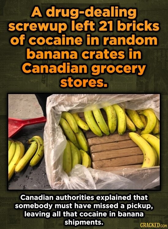 A drug-dealing screwup left 21 bricks of cocaine in random banana crates in Canadian grocery stores. Canadian authorities explained that somebody must have missed a pickup, leaving all that cocaine in banana shipments.