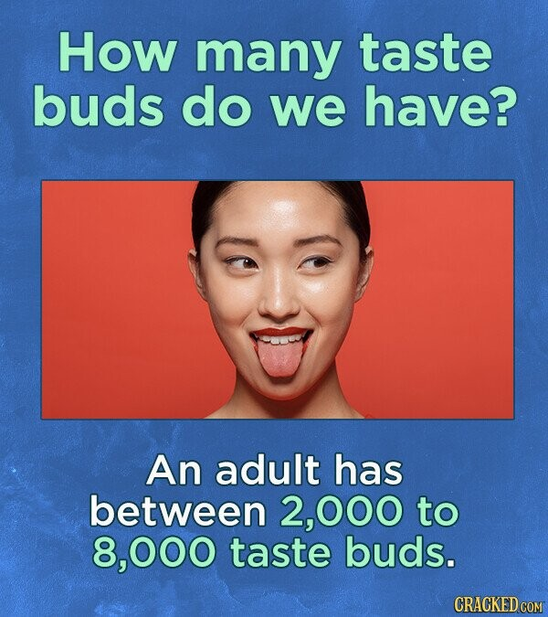 How many taste buds do we have? An adult has between 2,000 to 8, ,000 taste buds. CRACKED COM