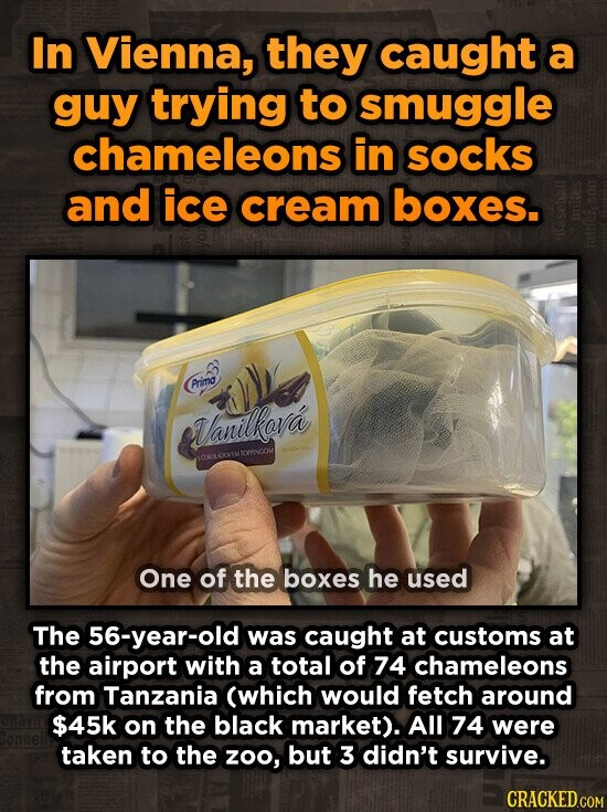 In Vienna, they caught a guy trying to smuggle chameleons in socks and ice cream boxes. NE, Arimo Vanilkova PPyAOU 0 One of the boxes he used The 56-year-old was caught at customs at the airport with a total of 74 chameleons from Tanzania (which would fetch around $45k on