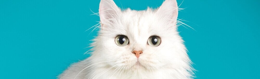 14 Cat Facts To Make Your Brain Purr