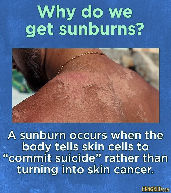 Why do we get sunburns? A sunburn occurs when the body tells skin cells to commit suicide rather than turning into skin cancer. CRACKED COM