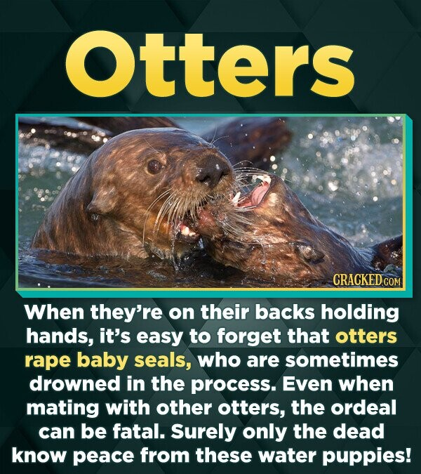 otters CRACKEDco When they're on their backs holding hands, it's easy to forget that otters rape baby seals, who are sometimes drowned in the process.