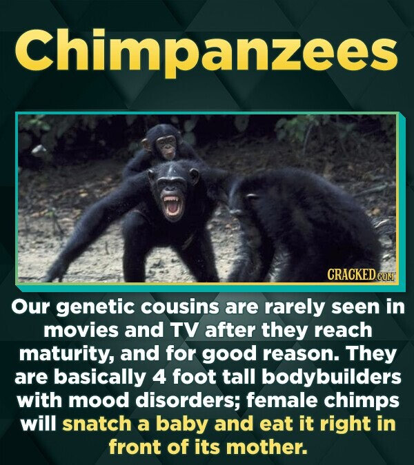 Chimpanzees CRACKED CONT Our genetic cousins are rarely seen in movies and TV after they reach maturity, and for good reason. They are basically 4 foo