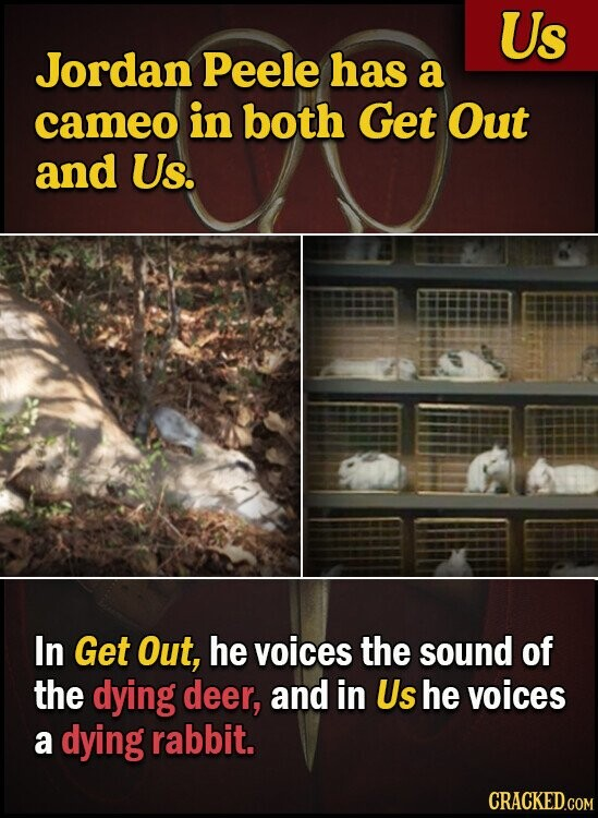 Us Jordan Peele has a cameo in both Get Out and Us. In Get Out, he voices the sound of the dying deer, and in Us he voices a dying rabbit. CRACKED.COM