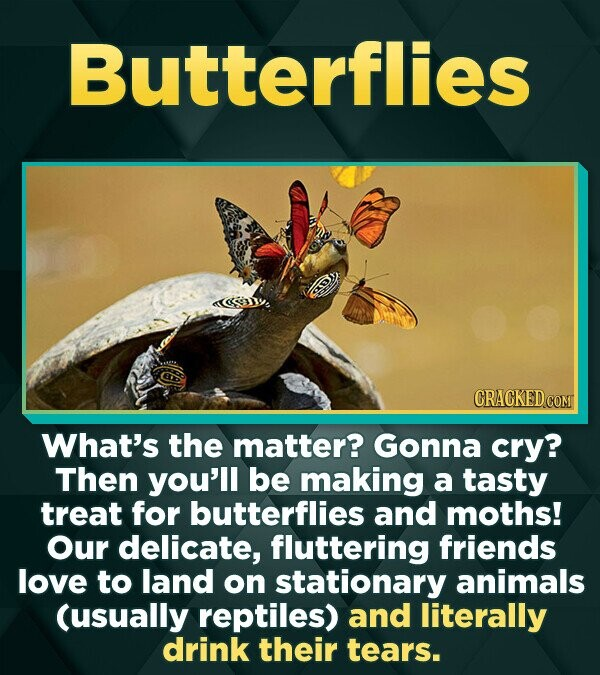 Butterflies CRACKEDCON What's the matter? Gonna cry? Then you'll be making a tasty treat for butterflies and moths! Our delicate, fluttering friends l