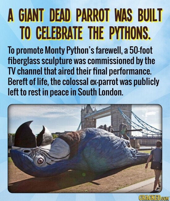 A GIANT DEAD PARROT WAS BUILT TO CELEBRATE THE PYTHONS. To promote Monty Python's farewell, a 50-foot fiberglass sculpture was commissioned by the TV channel that aired their final performance. Bereft of life, the colossal ex-parrot was publicly left to rest in peace in South London.