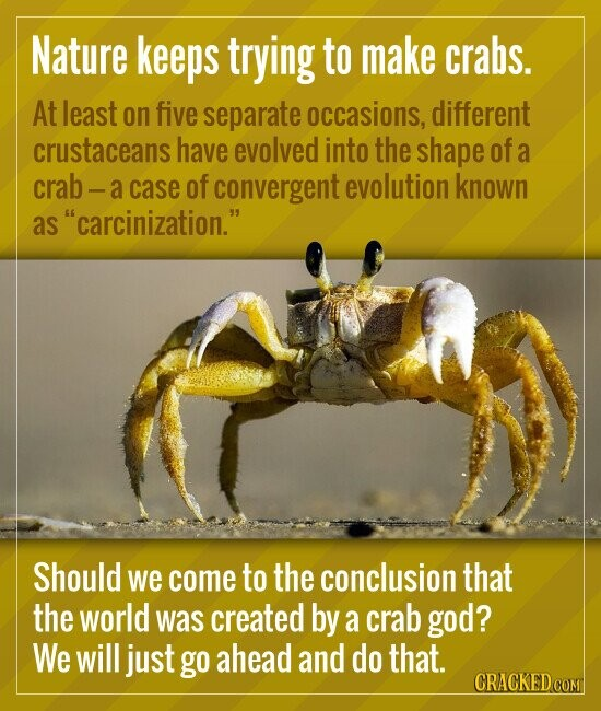 Nature keeps trying to make crabs. At least on five separate occasions, different crustaceans have evolved into the shape of a crab - a case of conver