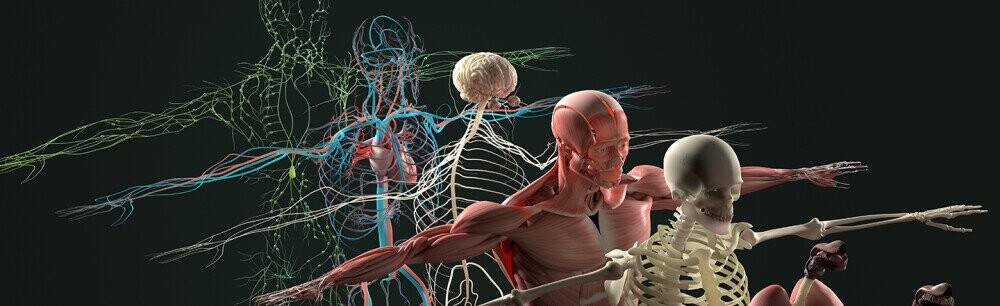 14 Questions About Human Bodies, Answered