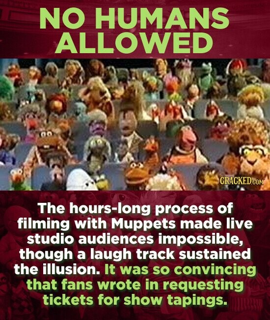 NO HUMANS ALLOWED O The hours-long process of filming with Muppets made live studio audiences impossible, though a laugh track sustained the illusion. It was so convincing that fans wrote in requesting tickets for show tapings.