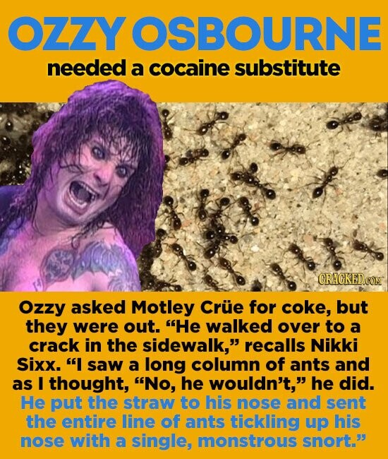 OZZY OSBOURNE needed a cocaine substitute CRAGKEDCOM Ozzy asked Motley Crue for coke, but they were out. He walked over to a crack in the sidewalk, recalls Nikki Sixx. I saw a long column of ants and as I thought, No, he wouldn't, he did. He put the straw to