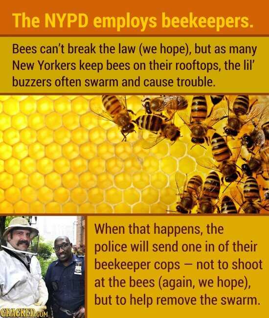 The NYPD employs beekeepers. Bees can't break the law (we hope), but as many New Yorkers keep bees on their rooftops, the lil' buzzers often swarm and cause trouble. When that happens, the police will send one in of their beekeeper copS - not to shoot at the bees (again, we
